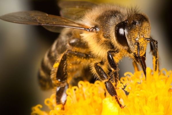 Ziua Mondială a Albinei. AFIR sprijină crescătorii de albine și procesatorii de produse apicole