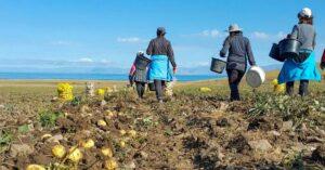 ITALIA. Informații UTILE pentru românii care vor să se angajeze în sectorul AGRICOL