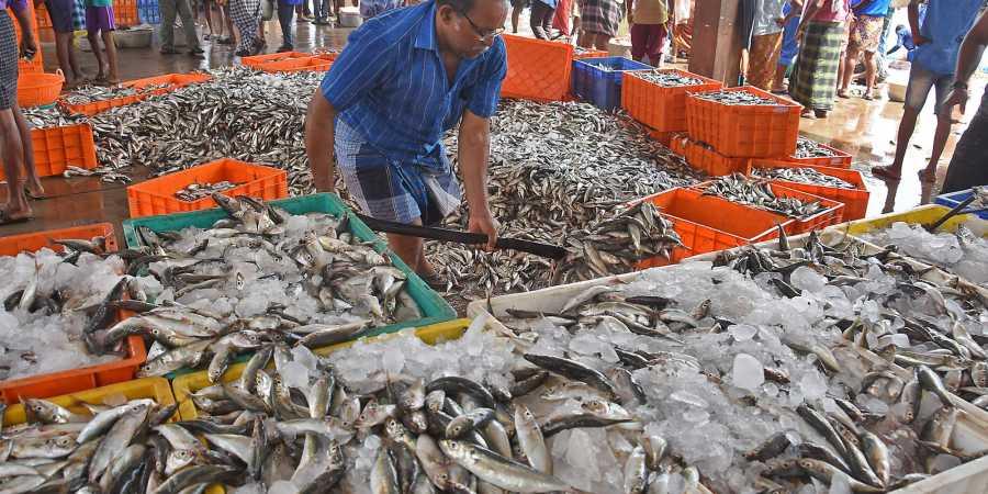 Alertă alimentară! Ce s-a descoperit în piața de pește din Beijing este alarmant