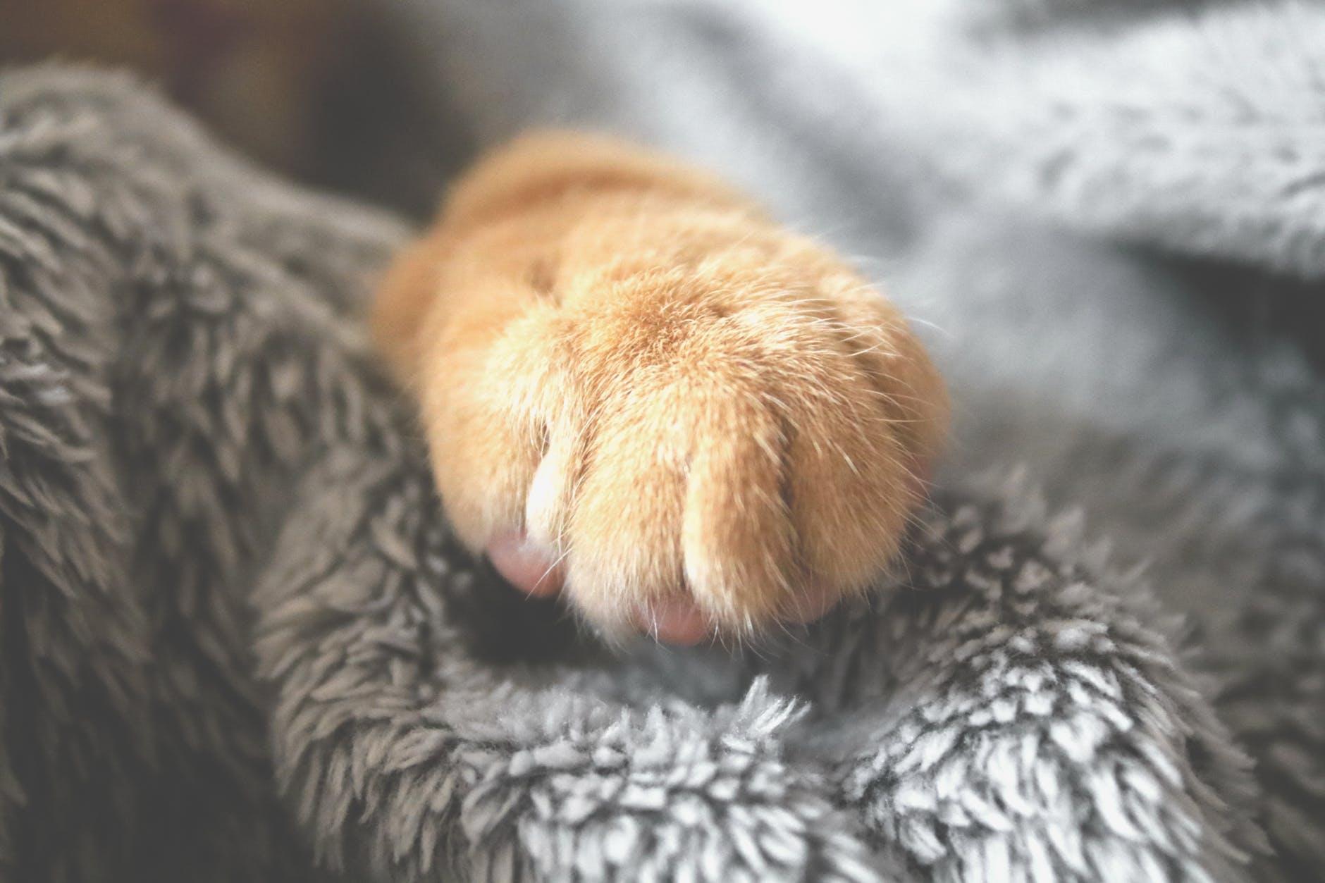Torsul pisicii are efecte miraculoase! Afectiunile pe care le poti trata cu ajutorul pisicii