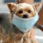 Un nou caz de coronavirus la animale! SUA a luat măsuri radicale