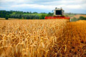 Preşedintele Patronatului Român din Industria de Morărit şi Panificaţie a spus ce se întâmplă cu grâul