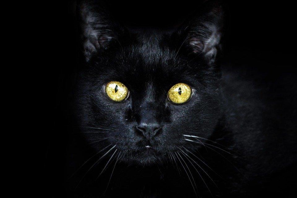 Superstitii sau realitate? Adevarul despre animalele cu puteri supranaturale