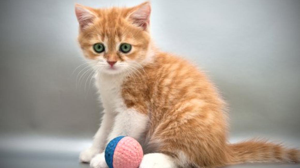 """În casa ta e armonie și pace? O pisică îți poate """"spune"""""""