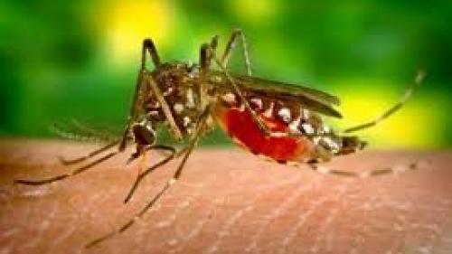 Vești bune! Primăria Capitalei. Al optulea tratament de combatere a țânțarilor