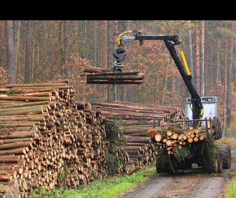Politisti au confiscat material lemnos de aproape 800 de mii de lei