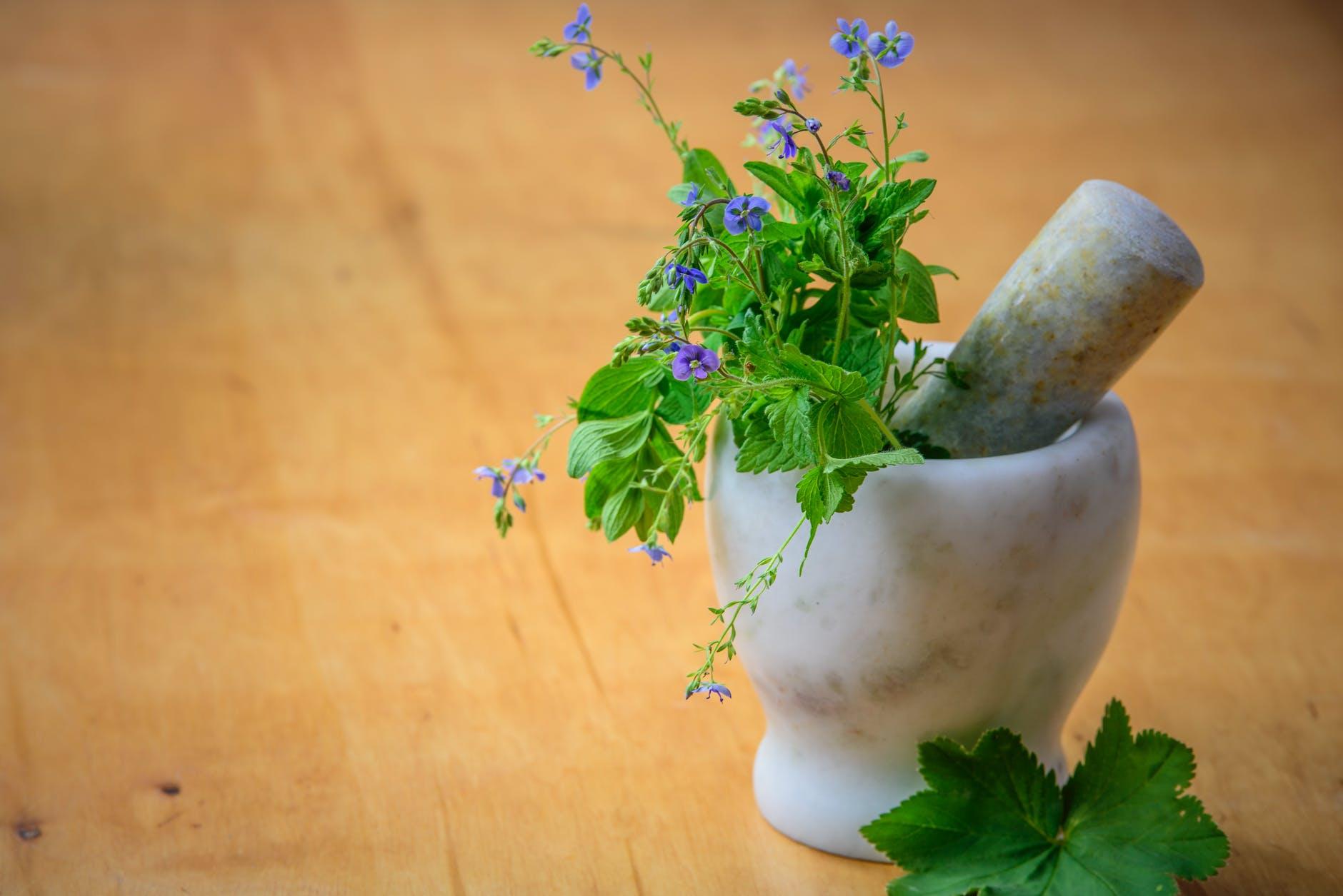 Natură pentru sănătate. Prof. Univ. Dr. Vlad Ciurea: În plante există totul. Îmbunătățesc starea întregului organism