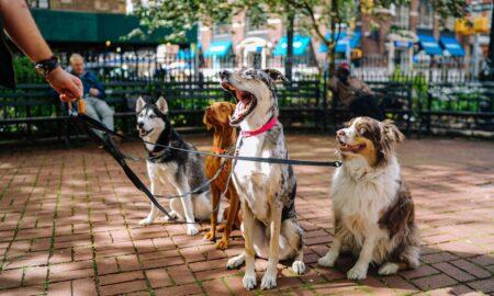 Cele mai potrivite rase de câini pentru copii