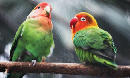 Ce nu au voie sa manance papagalii? Multi nici nu se gandesc la lucrul acesta