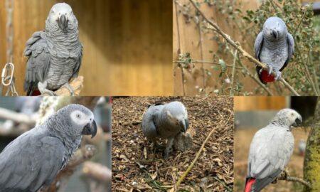 5 papagali îi înjurau pe vizitatorii unei grădine zoologice. Ce au pățit Billy, Eric, Tyson, Jade și Elsie?