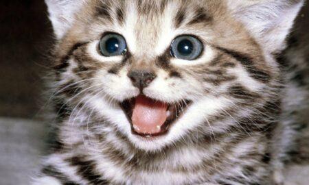 4 octombrie- Ziua internațională a animalelor. Mesaj emoționant pentru animalul de companie