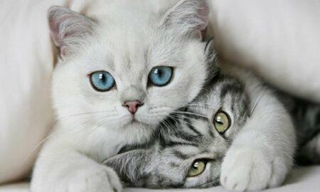 Perspectiva din care ne văd pisicile. Oamenii sunt GIGANȚI?