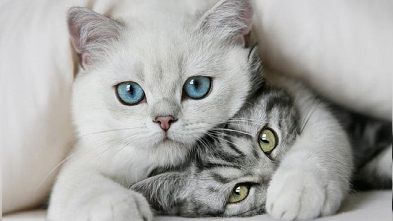 """Știai că? Curiozități despre pisici. """"Pisicile pot detecta un cutremur cu 10 minute înaintea oamenilor"""""""