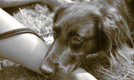 De ce persoanele care trăiesc în preajma animalelor sunt mai sănătoase. Concluzia specialiștilor te va uimi