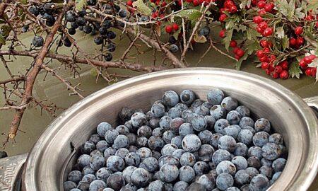 Antibioticul natural, aliatul tău în sezonul rece