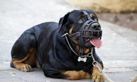 """Coșmar pentru o femeie din Suceava. A fost """"MĂCELĂRITĂ"""" de patru câini Rottweiler"""