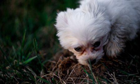 Doar așa poți evita suferința animalelor de companie. Sfaturi de la specialist
