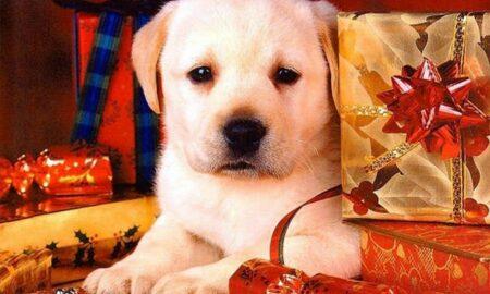Atenţie la decoraţiunile de Crăciun!Marley a înghiţit 34