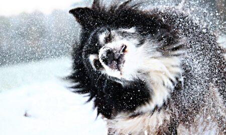 Îngrijirea câinelui pe timp de iarnă. Sfaturi și recomandări