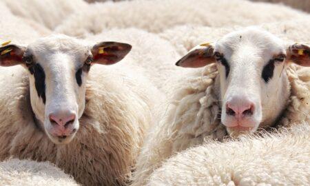 Ambiția unui cioban l-a adus în topul celor mai căutate știri. Care este scopul acestuia