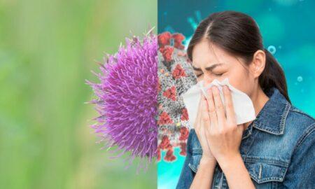Vești grozave pentru alergicii la ambrozie! Cercetării din Timișoara au creat un vaccin împotriva alergiei la polen