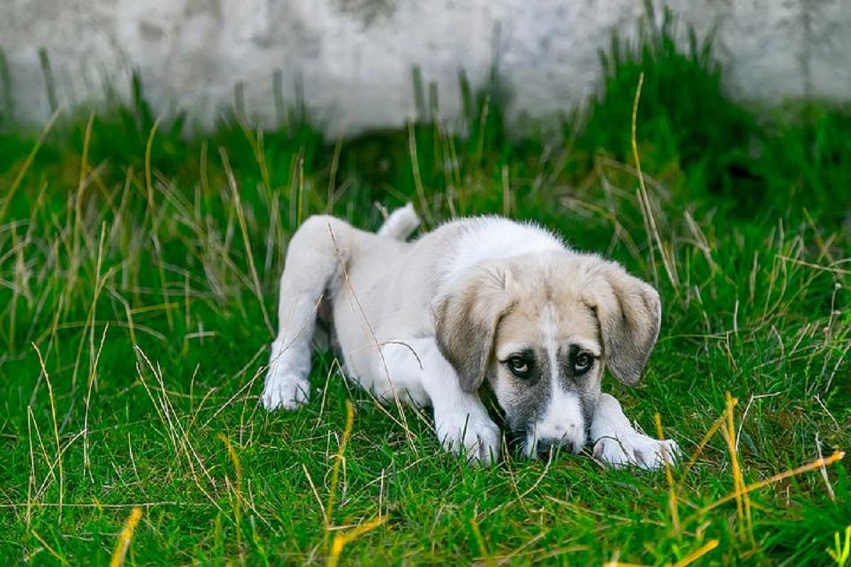 Legislația privind protecția animalelor reglementează situația tuturor animalelor, inclusiv a celor sălbatice