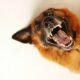 Beneficiile psihice aduse bătrânilor de către animale. Bucurie și inimă sănătoasă