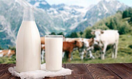 Consumi lapte de vacă? Iată care este adevărul: sănătate sau risc de boală