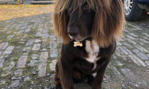 Îți cerți câinele? Efectele asupra lui pot fi extrem de grave