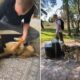 Unde ajung câinii salvați din INFERN? Dezvăluirea momentului