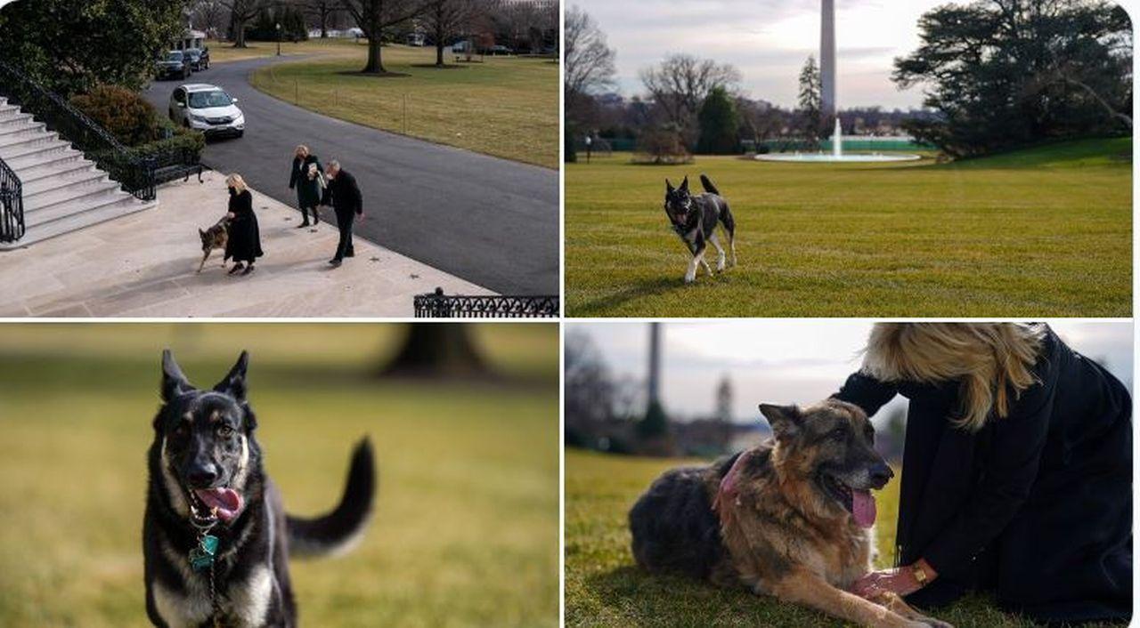 Bun venit la Washington, Champ și Major! Câinii lui Joe Biden au ajuns la Casa Albă