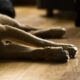 Halucinant! 70 de câini morți după ce au consumat un tip de hrană pentru animale