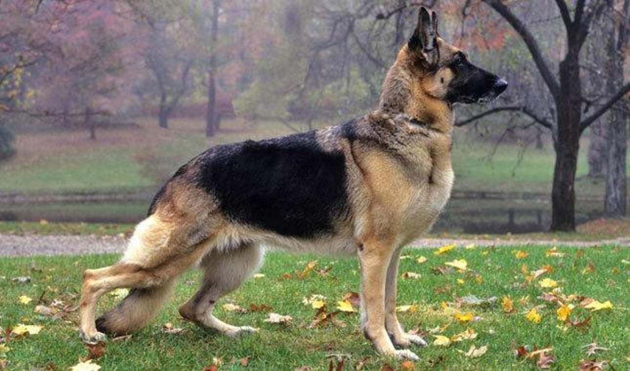 Când poate înterveni poliția pentru salvarea unui animal. Precizările Poliției Române