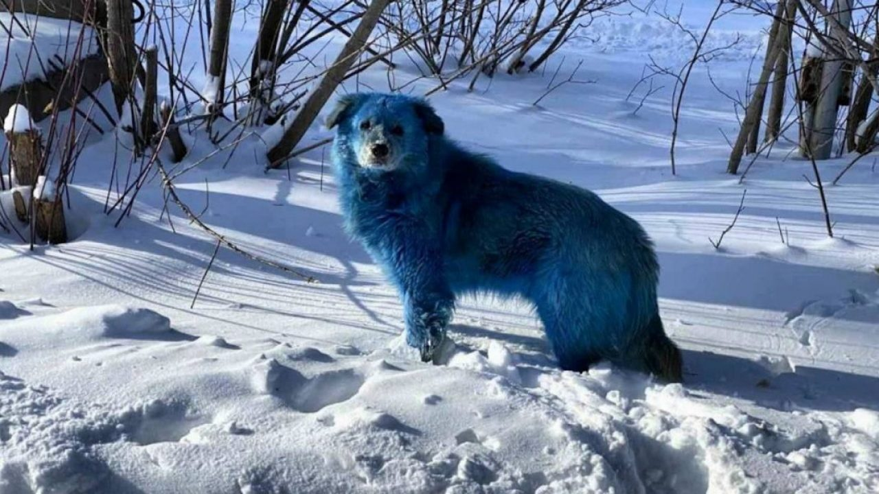 Câini extrem de ciudați în Rusia. Nimeni nu știe de unde vin. Autoritățile sunt în alertă