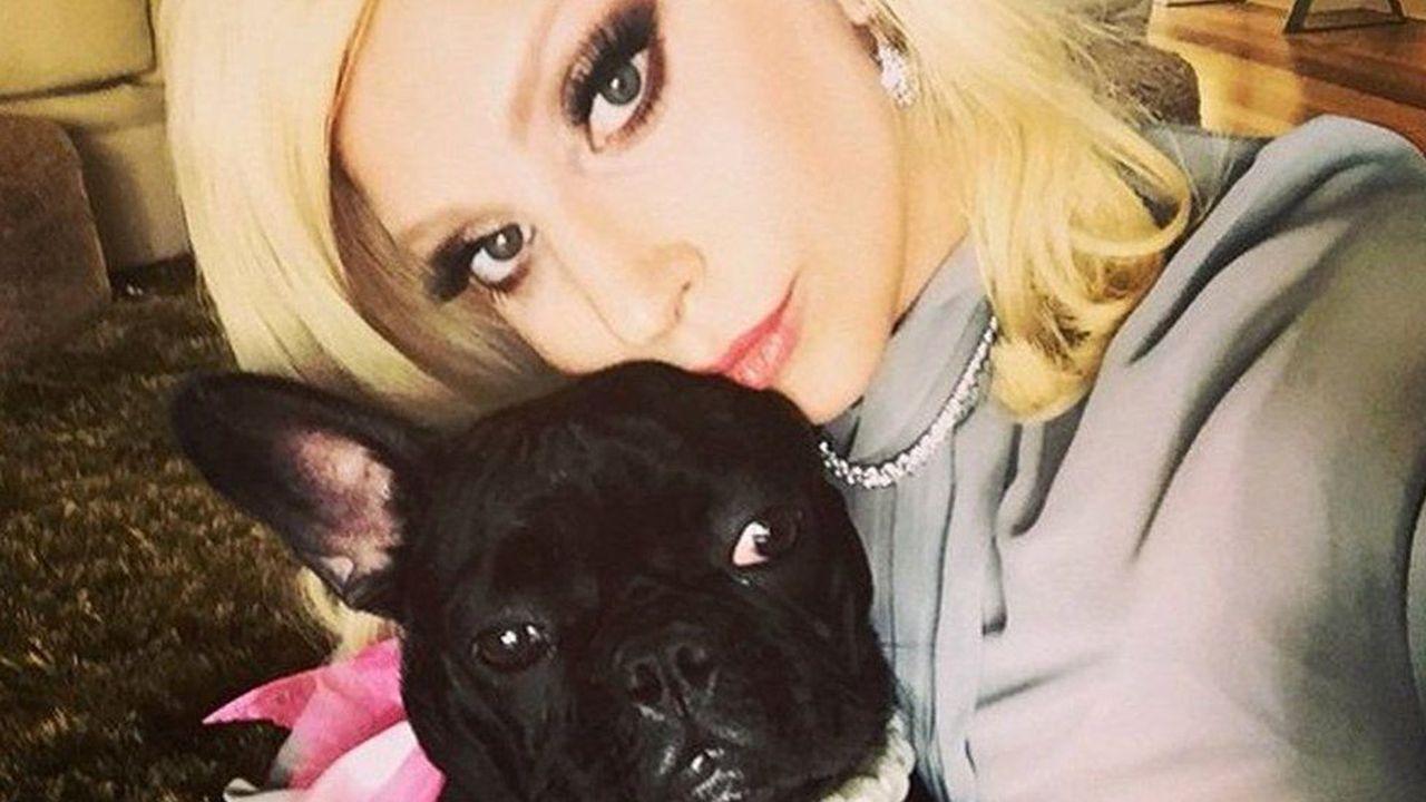 Lady Gaga e în stare de șoc: Nu se aștepta să-și piardă câinii într-un mod așa de brutal