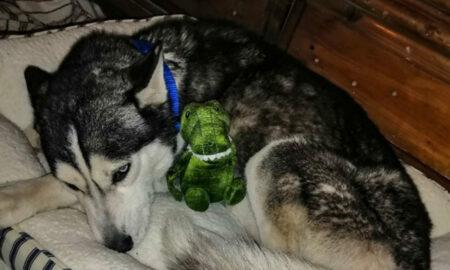 Totul pentru a salva viața celui mai bun prieten! Ce face o tânără pentru a-i salva viața câinelui