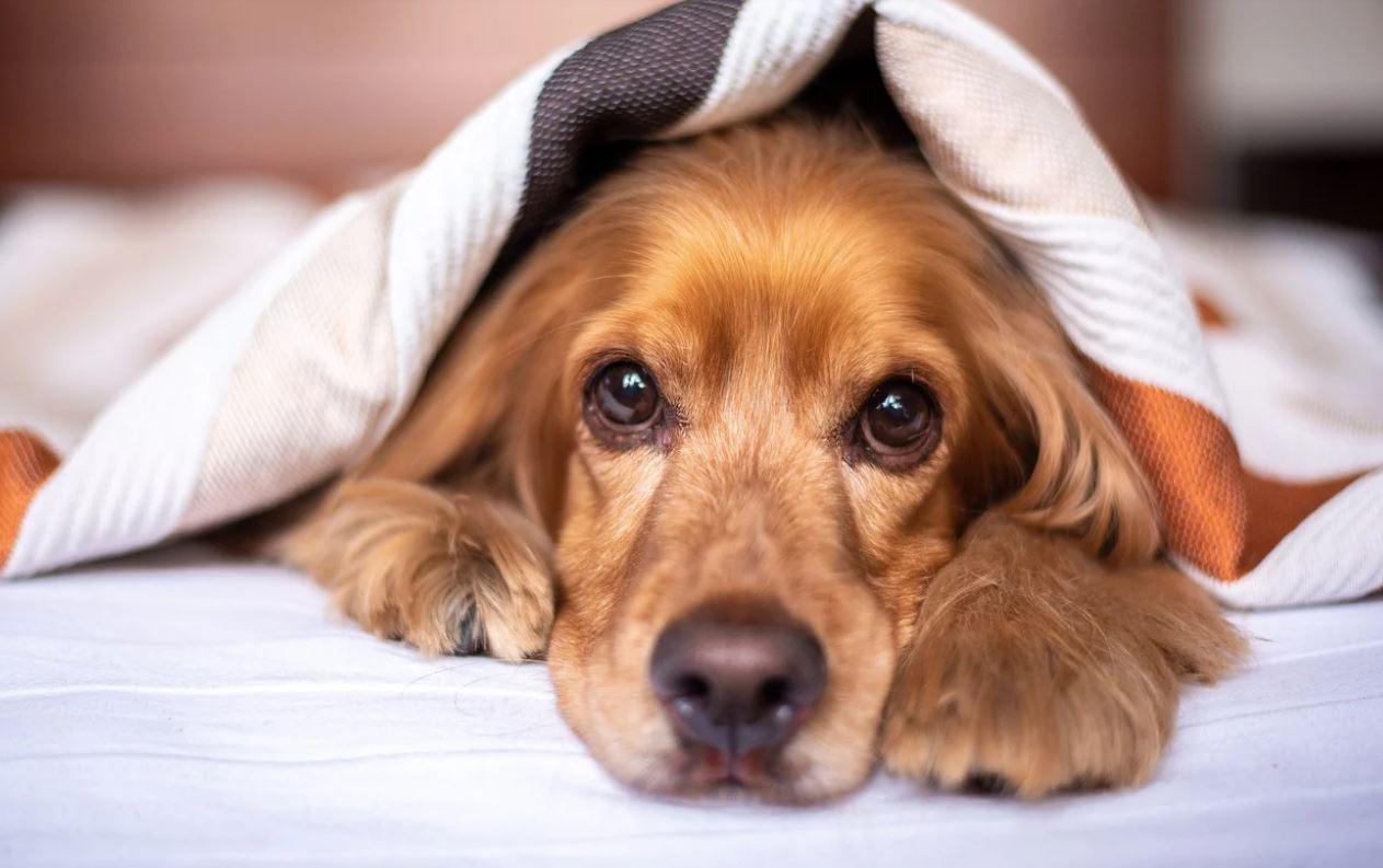 Cruzime fără margini față de un câine. Mesajul salvatoarei: Niște copilași au putut să facă așa ceva!