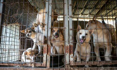 Schimbare de situație în cazul adăpostului de la Odăi. S-a decis soarta a 750 de câini