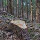 Atac de tip mafiot într-o pădure din România. Cinci persoane sunt audiate şi la această oră