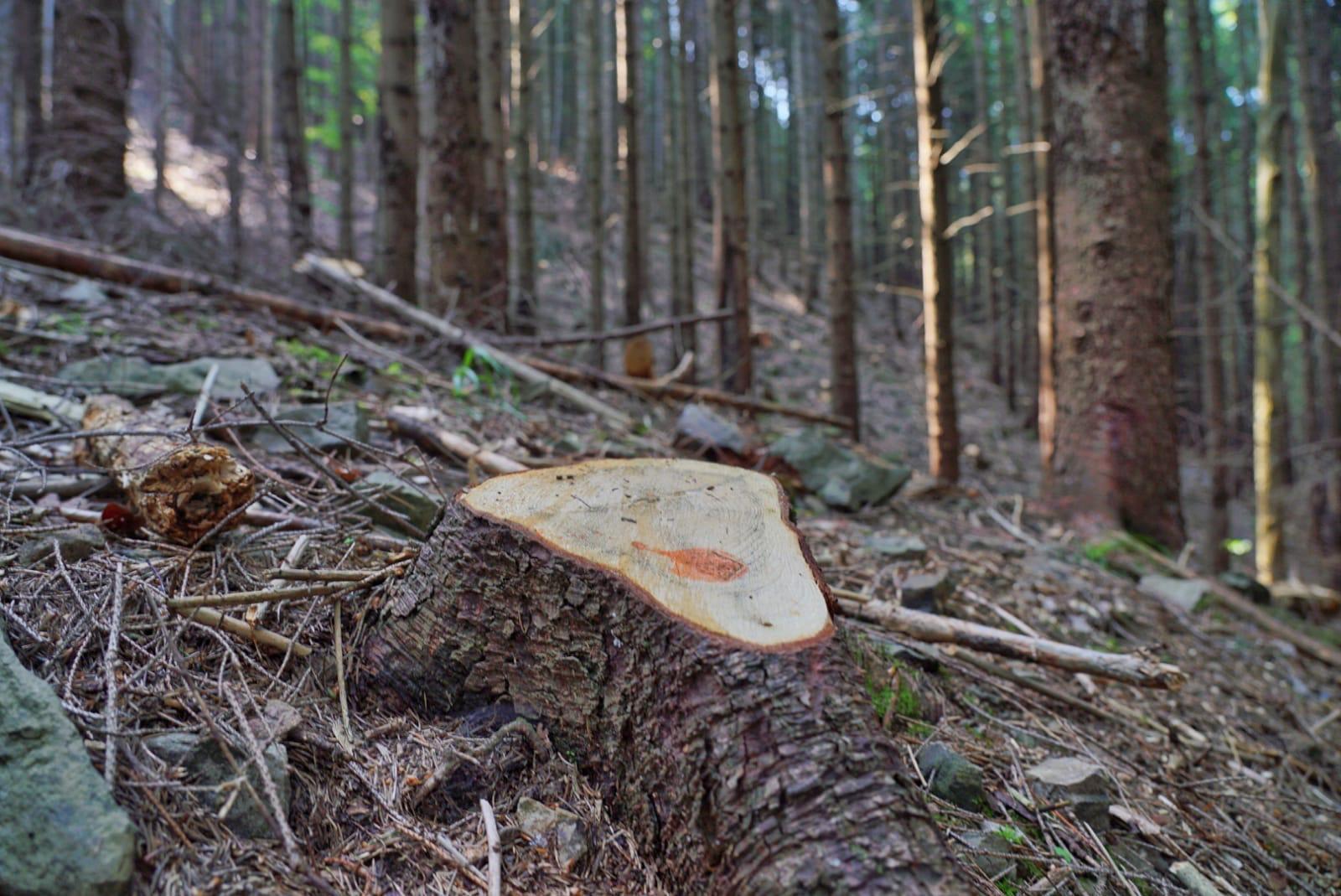 Termen limită pentru proprietarii de păduri. Mai au o săptămână la dispoziție