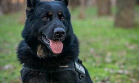Gipsy, câinele erou din MAI! Recordul pentru care a fost apreciat