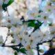 Echinocțiul de primăvară 2021! Ce trebuie să faci ca să îți meargă toate ca la carte