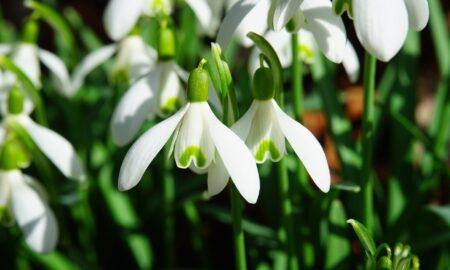 Superstiții 1 Martie. Să nu faci ASTA la începutul primăverii! Este un semn al ghinionului!