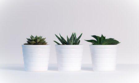 Ține această plantă în camera ta! Purifică aerul și elimină alergenii într-un timp record