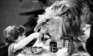 Povestea familiei care creștea lei acasă, emoționantă și terifiantă! Au plătit prea scump