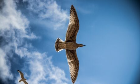 Locuitorii unui mare oraș au trecut printr-o adevărată sperietură! Mii de păsări au invadat...