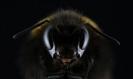 """Albinele l-au ucis, greșală fatală ce nu trebuie făcută...Tudor Ciuhodaru: """"Nu le provocați"""""""