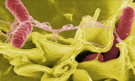 Infecțiile virale, singura amenințare mortală epidemiologică! Lumea medicală este în alertă