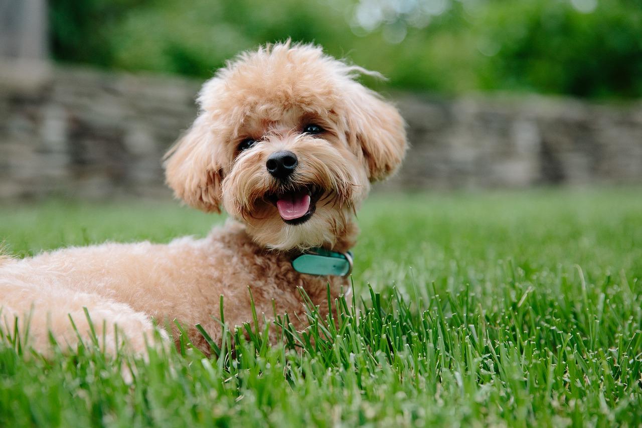 Primul câine detectat cu varianta britanică de Sars-CoV-2. Cum a fost depistat?