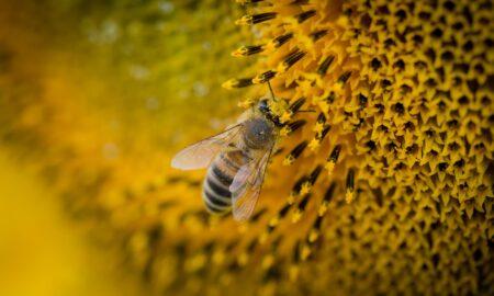 Propolisul - miracolul creat de albinuțe. Ce beneficii are acest medicament al naturii!